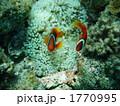 海中 熱帯魚 海水魚の写真 1770995