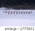 タウシュベツ橋梁 1773821