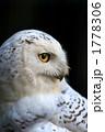 横顔 フクロウ 一羽の写真 1778306