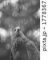 一羽 鷲 ワシの写真 1778367