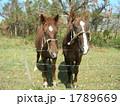 小浜島の馬たち 1789669