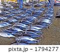 まぐろ 鮪 魚市場の写真 1794277