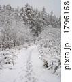 雪景色 雪道 森林の写真 1796168