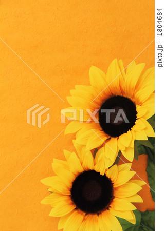 スーパー猛暑の向日葵 1804684