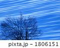 雪原と大樹Ⅱ 1806151
