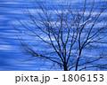 冬の大樹Ⅱ 1806153