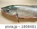 秋シャケ 1808481