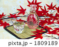 冷酒 1809189