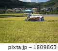 淡路島(淡路米)の稲刈り 1809863