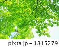 新緑 1815279