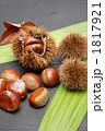 毬栗 くり クリの写真 1817921