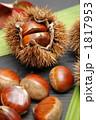 毬栗 くり いがぐりの写真 1817953