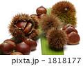 栗 毬栗 くりの写真 1818177