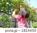 野菜を採る女の子 1824450