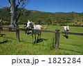 家畜 陸の哺乳類 馬の写真 1825284