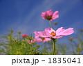 FLOWERS 20101003001 1835041