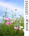 FLOWERS 20101003002 1835043