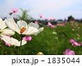 FLOWERS 20101003003 1835044