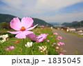 FLOWERS 20101003004 1835045
