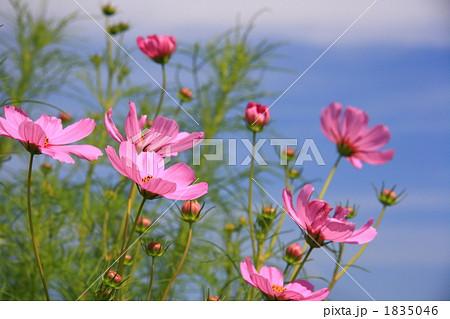 FLOWERS 20101003005 1835046