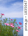 FLOWERS 20101003006 1835047