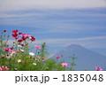 FLOWERS 20101003007 1835048