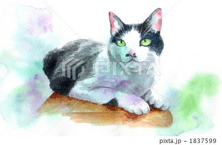 白黒猫1 1837599
