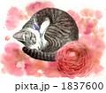 水彩 ペット 猫のイラスト 1837600