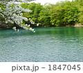 湖 シロヤシオ ゴヨウツツジの写真 1847045