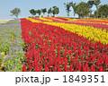 お花畑 1849351