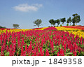 お花畑 1849358