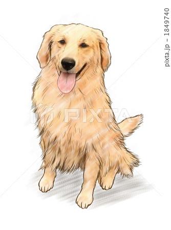 犬ゴールデンレトリバー