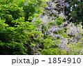 ふじ フジ やまふじの写真 1854910
