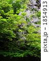 藤と新緑 1854913