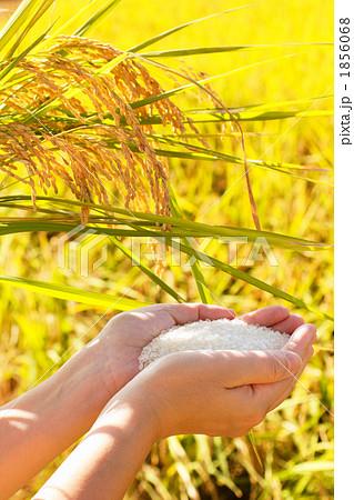 黄金色の実りと白米を持つ女性 1856068