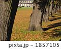 秋の公園 1857105