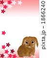 年賀状2011年 うさぎ 1866240