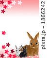 年賀状2011年 うさぎ 1866242