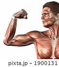 人体 力こぶ ちからこぶのイラスト 1900131