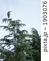 青鷺 蒼鷺 動物の写真 1903076