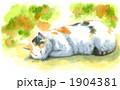 三毛猫 日本猫 昼寝のイラスト 1904381
