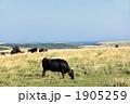 黒毛和牛 1905259