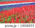 花畑2 1908855
