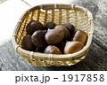 くり クリ マロンの写真 1917858