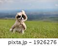 着る 犬 動物の写真 1926276