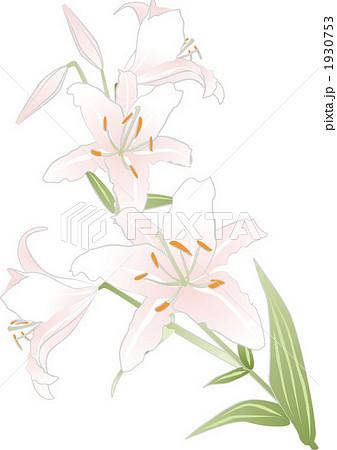 百合の花のイラスト素材 1930753 Pixta