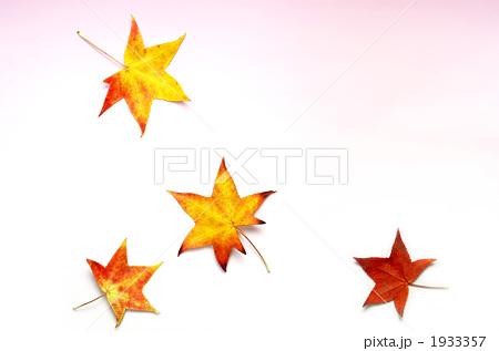 楓 落ち葉 葉の写真素材 [1933357] - PIXTA