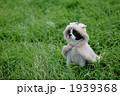 着る 犬 動物の写真 1939368