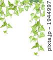 アイビーゼラニウム アイビー 観葉植物の写真 1944997