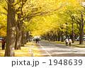 銀杏並木 1948639